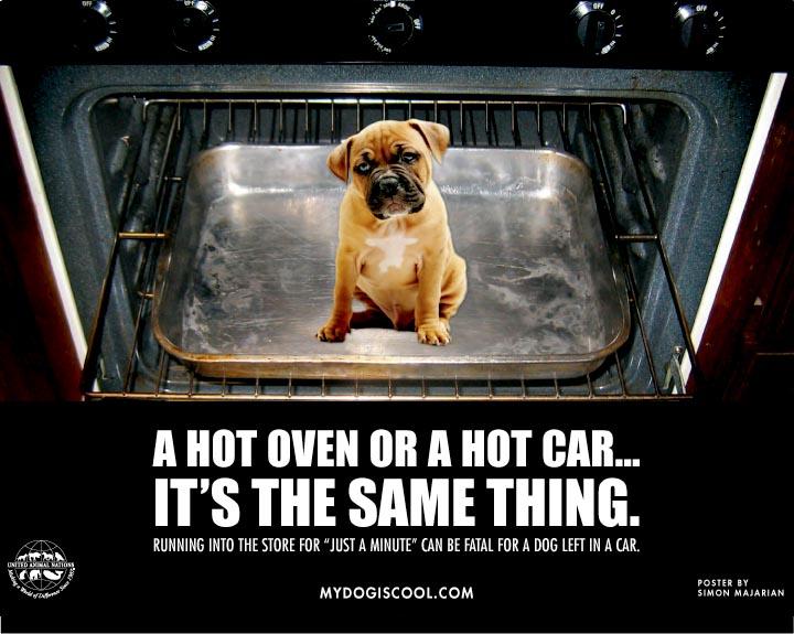 [oven+dog]
