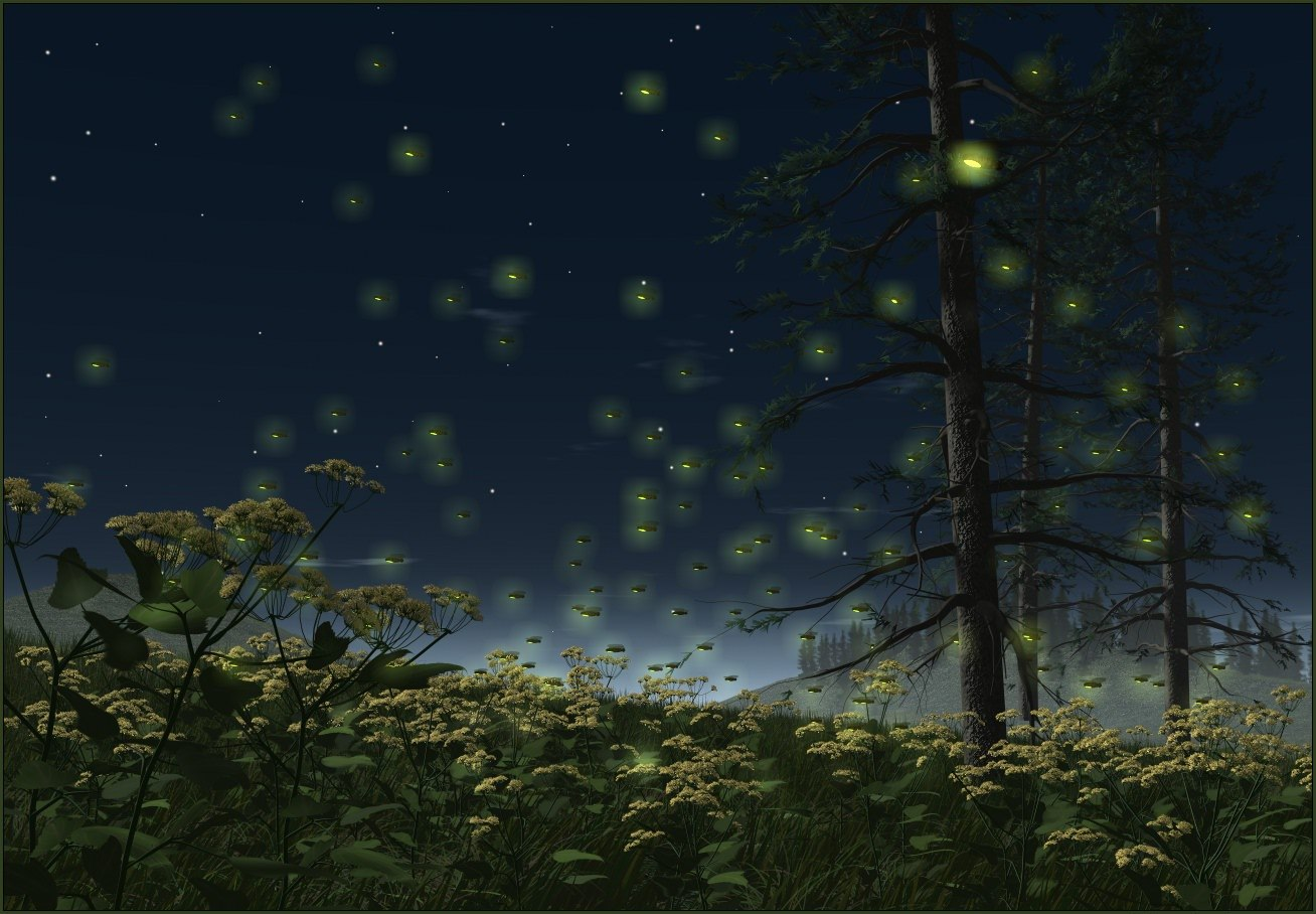 Paradis Express Lucioles Fireflies