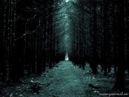 floresta20negra.jpg (500×375)