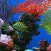 Ima li života u morskoj dubini?