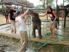 Elephantstay,Thailand,