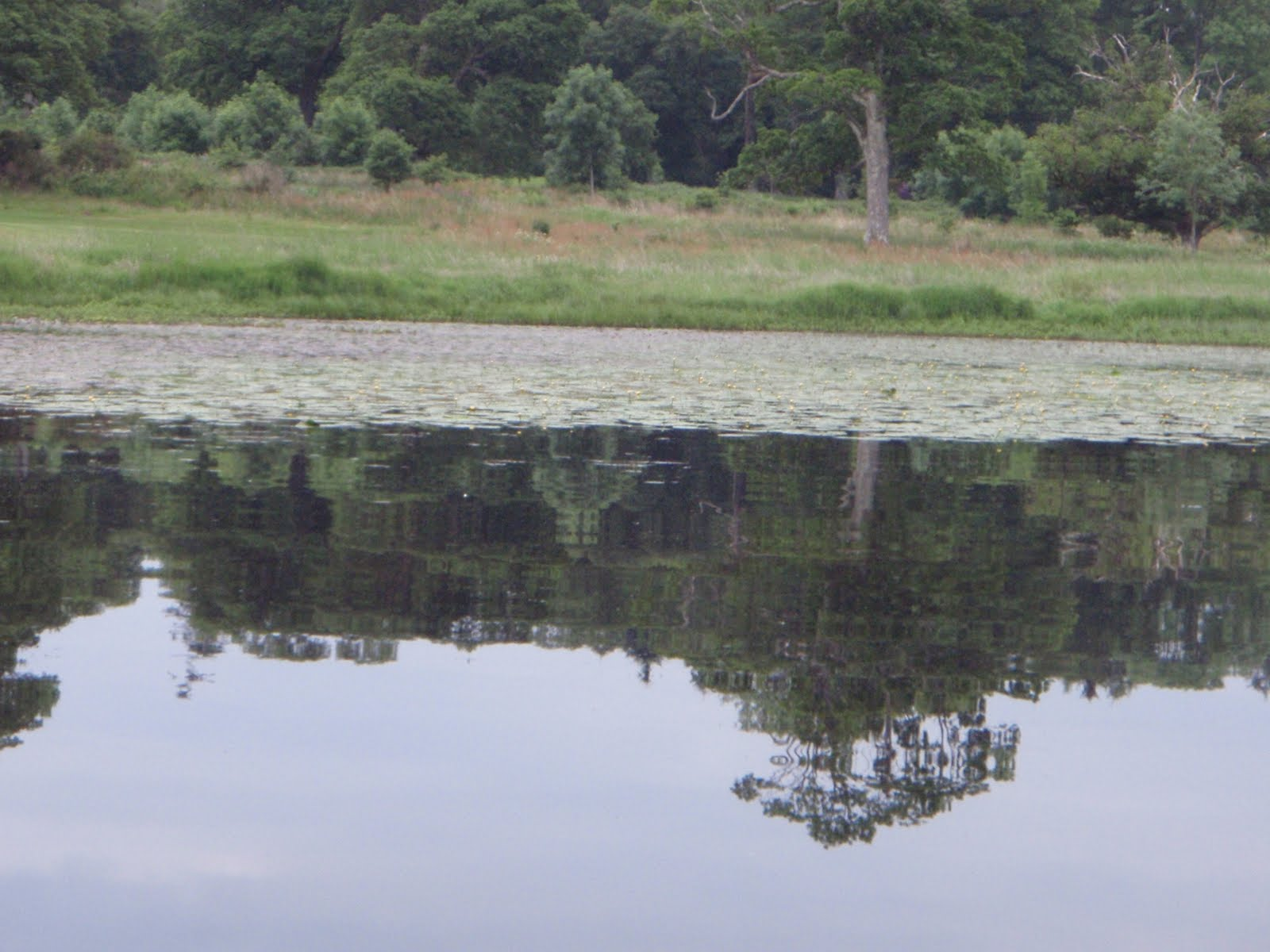 Scottish fishing guide pike fishing guide hot spot loch for Loch lomond fishing