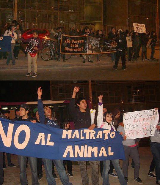 Protestas  Contra los Tachuelas