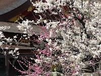 社殿を背景に紅白梅がきれいだった