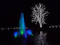 高さ約15mのトウカエデ、噴水が彩を添えた