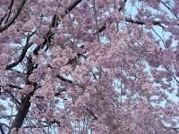 春桜のころ、美しい景観を魅せる