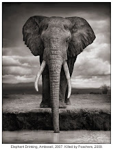 Photographer's I love - Nick Brandt