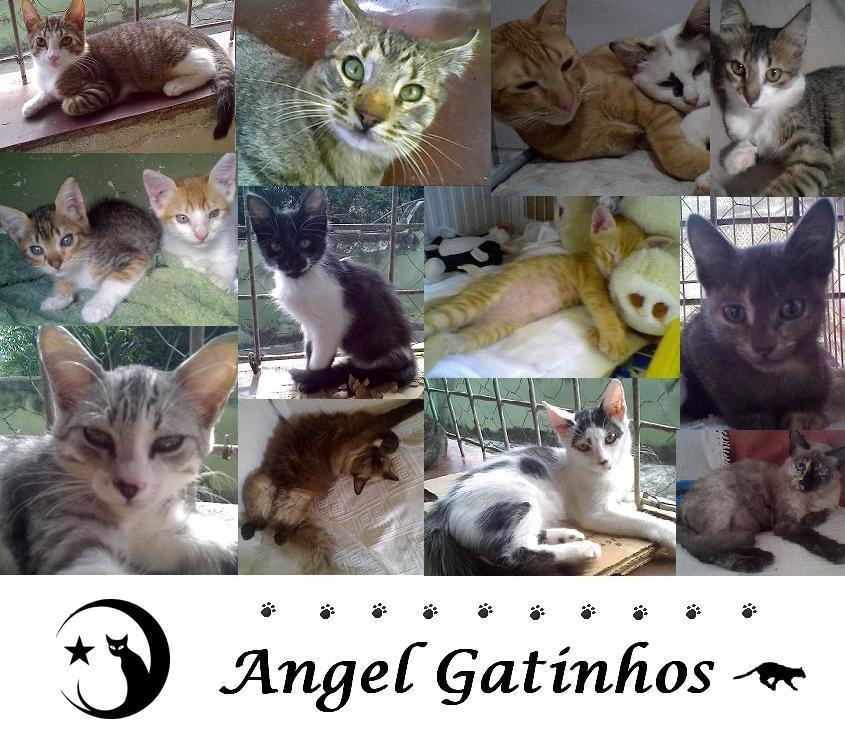 ♥ Angel Gatinhos ♥ Adote um gato adulto ♥