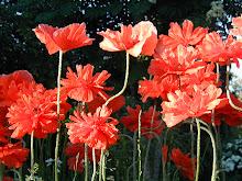 Blommor från vår trädgård