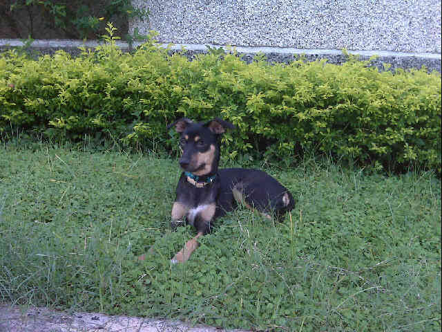Fundación de Ayuda y Protección Animal de Anzoátegui