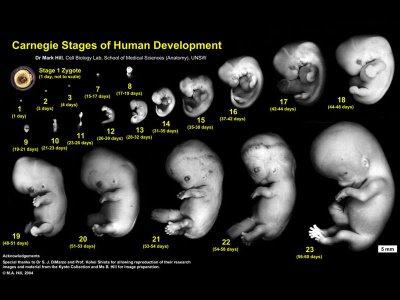 El embarazo - Cuanto debe pesar un bebe de 4 meses ...