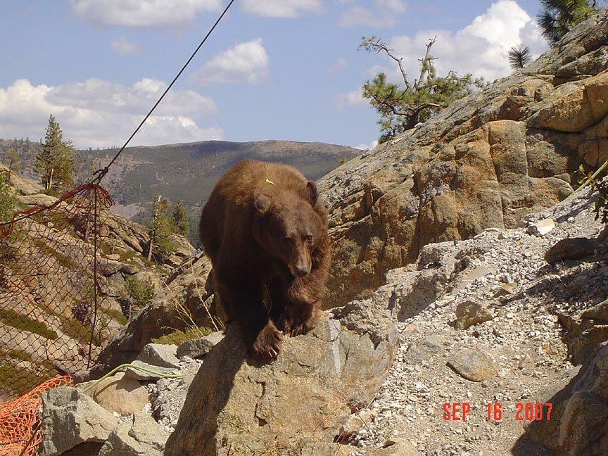 [Bear+6.bmp]