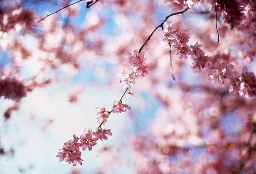 [pink+flower.jpg]