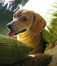Cuide bem dos cães !!!!!!!!!