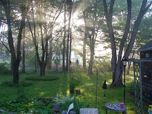 Sunrise in the back yard in the summer