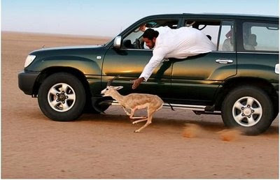 Man-in-car-in-desert-car-trying-to-catch-dear-with-bare-hands