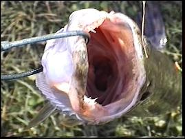 Egy éhes száj