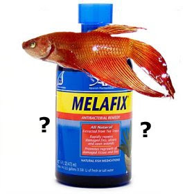 Melafix dangers, Betta, Labyrinth Fish, Pencil Fish