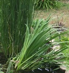 Pond Veggie Filter