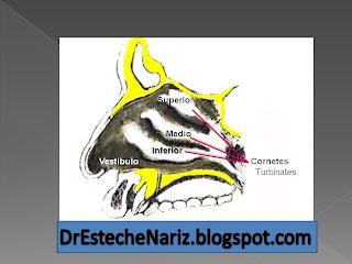 turbinates FUNCIÓN NASAL | Parte 3 | Rinoplastia | Nasen OP | Rhinoplasty | ¿Cuáles son las funciones de la Nariz? | Nose functions