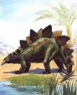 Stegosaurus!!!