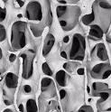 Структура на кост!!!