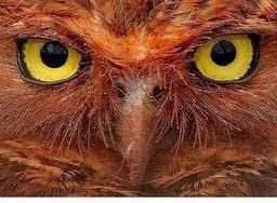 O Olhar da Coruja -