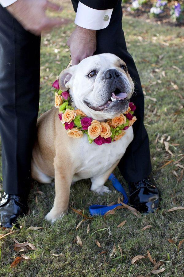 Dogs+Knot+On+Side Patricia Lyons via Style Me Pretty }