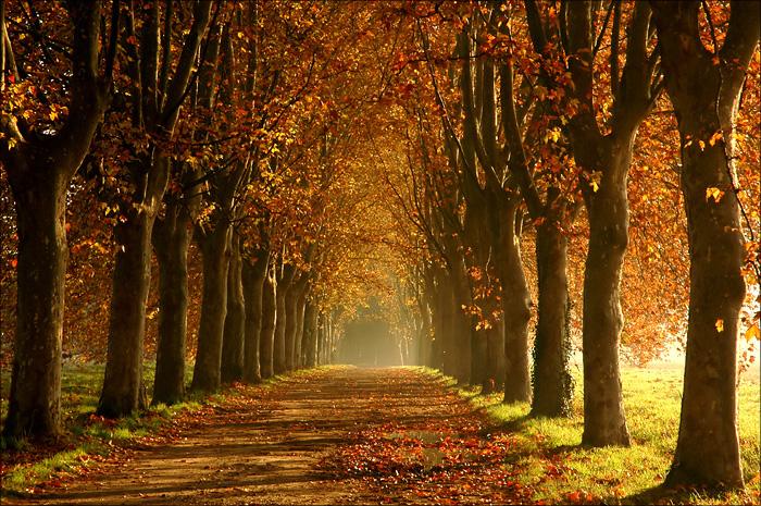 L'automne Allee-en-automne