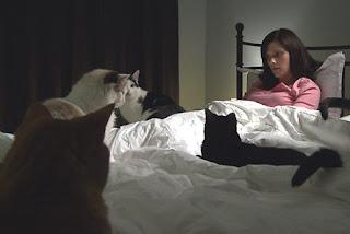samotna kobieta z kotami