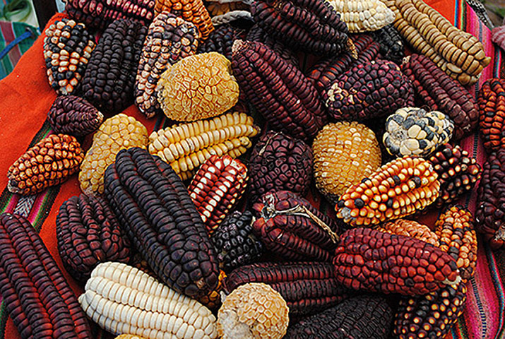 commodity market maize mexico and usa Structural changes in mexican corn market the most important agricultural commodity 200,000 tonnes per marketing year and came from the united states.