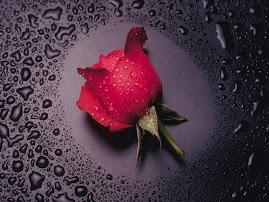 ROSE   4      LOVE