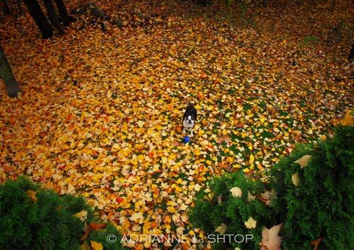[Brujo-Fall-08-(9)-copyright.jpg]