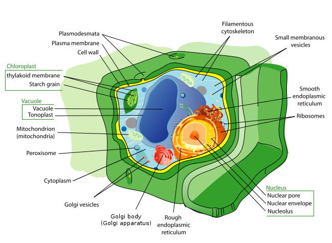 biology help  plant cell diagrambiology help