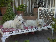 Tallulah & Missy