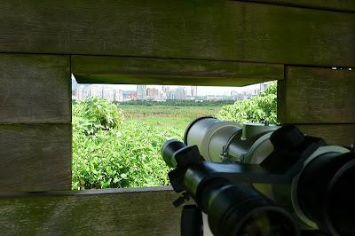 裝上正像鏡及目鏡來眼視欣賞眼前的沼澤風景也是很舒服的。
