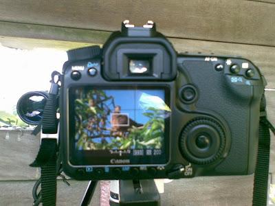 Canon 40D LiveView