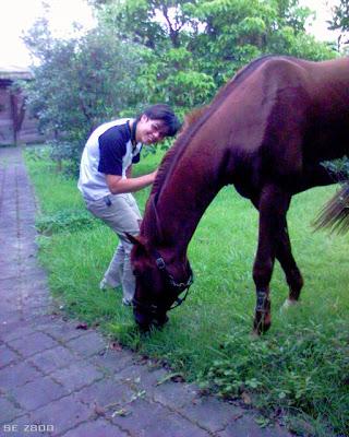 小馬與馬。