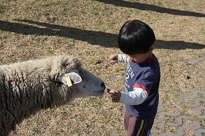 青青草原,節目結束後就放羊吃草了。