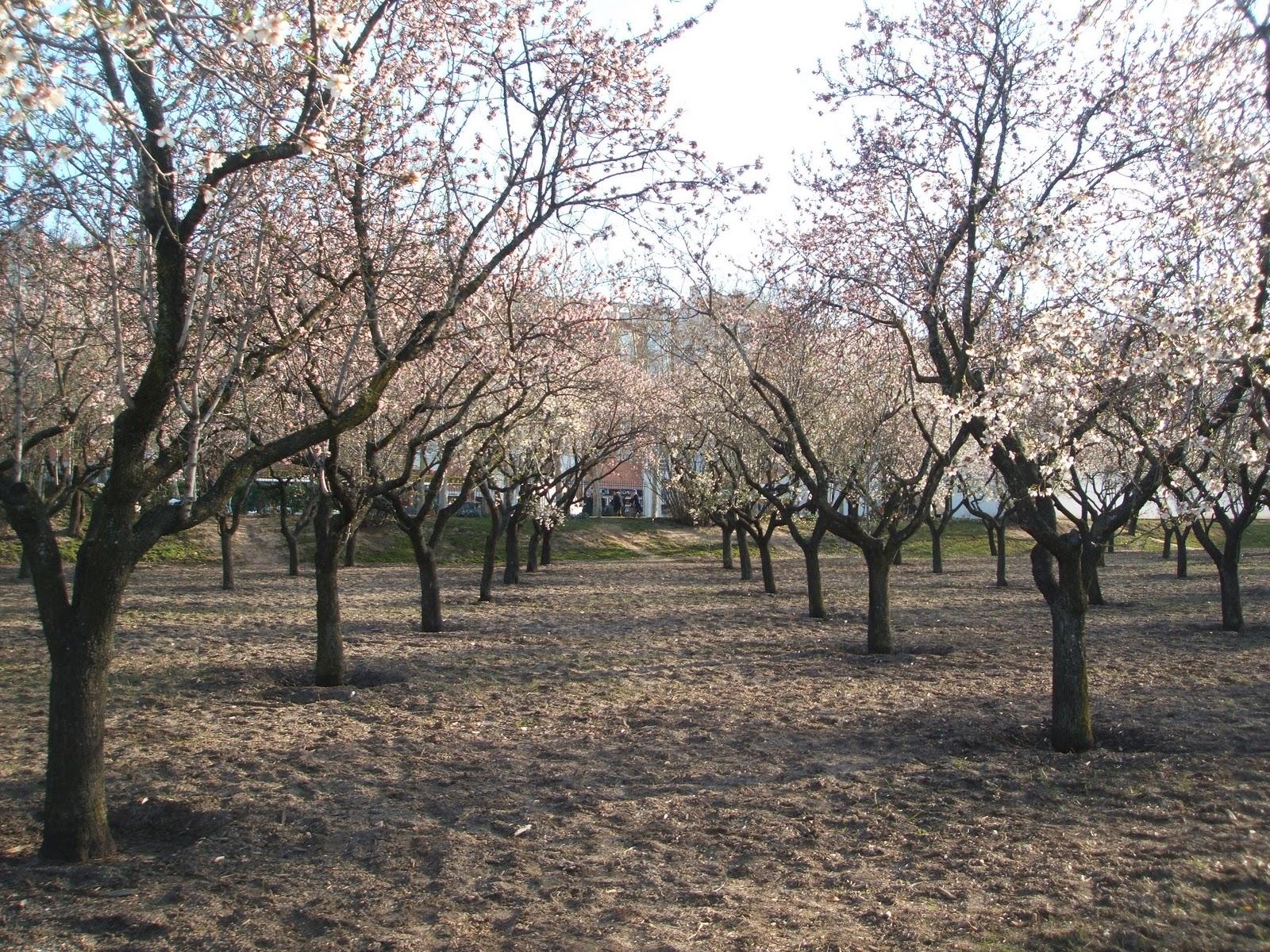 Ha llegado la primavera a la quinta de los molinos for Piso quinta de los molinos