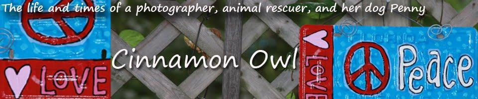 Cinnamon Owl