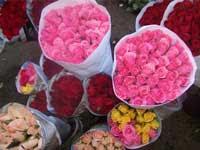 bunga rawa belong