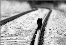 Iba caminando por las calles empapadas en olvido.