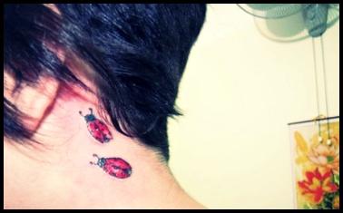 ladybug !