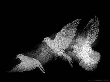 repentance pigeon