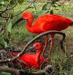 Floresta dos Guarás no Maranhão é destaque no ABC da Amazônia