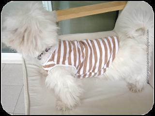 patron camiseta perro