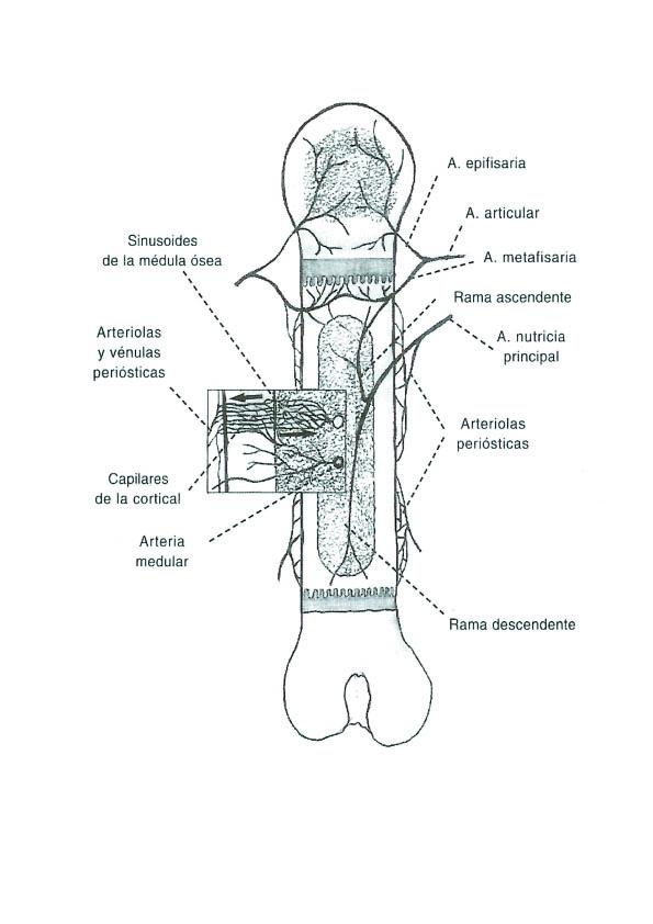 SERVICIO DE TRAUMATOLOGIA-ORTOPEDIA Y NEUROLOGIA: ENFERMEDAD DE LEGG ...