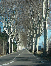 Plantanes Along D-96, France