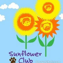 The All Girl Sunflower Club
